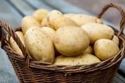Закупаем домашний и фермерский картофель от 10 тонн