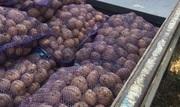 Картофель посадочный Ривьера