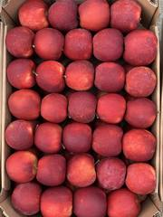 Продам яблоки со своего сада,  урожай 2019 г